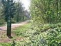Forest Fawr, nr Tongwynlais - geograph.org.uk - 410438.jpg