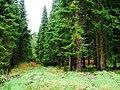 Forest Ride, Near Burnhead - geograph.org.uk - 274530.jpg
