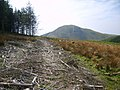 Forest Track - geograph.org.uk - 1274152.jpg