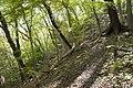 Forest in Mt.Nabeashi 11.jpg