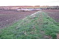 Former field boundary near Glebe Farm - geograph.org.uk - 1567795.jpg
