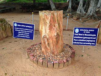National Fossil Wood Park, Tiruvakkarai - Image: Fossilwoodparkthiruv akarai 2