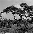Fotothek df ps 0002096 Bäume.jpg