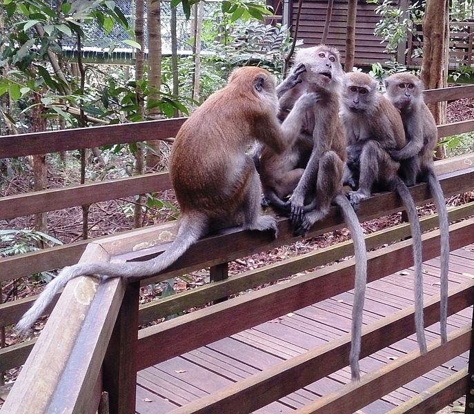 File:Four monkeys.jpg