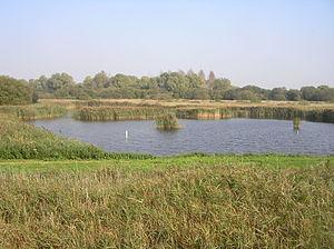 Fowlmere - Fowlmere nature reserve