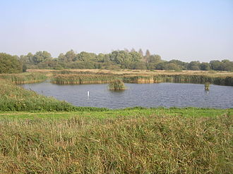Fowlmere RSPB reserve - Fowlmere from the Reedbed Hide
