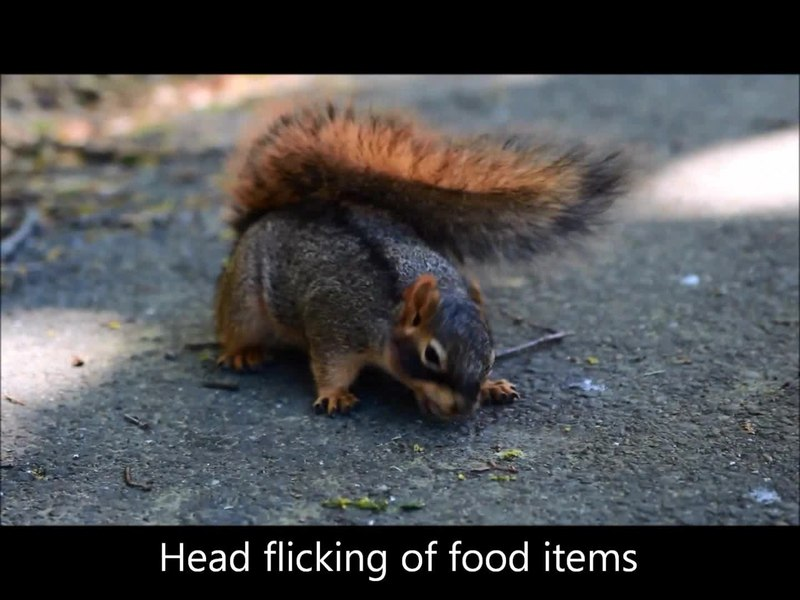 Food Scarcity In The Winter In New England