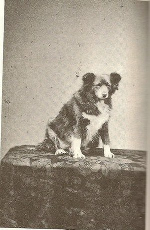 Frances Power Cobbe - Hajjin was Frances Power Cobbe's canine companion and traveled with her and her partner, Mary Lloyd, to Wales after Cobbe retired