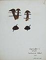 Fungi agaricus seriesI 056.jpg