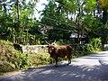 GOA Betalbatim - panoramio (2).jpg