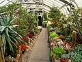Gaiser Conservatory (Manito Park) - IMG 7015.JPG