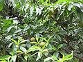 Gardenology.org-IMG 2110 rbgs11jan.jpg
