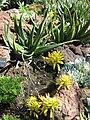 Gardenology.org-IMG 2533 hunt0903.jpg