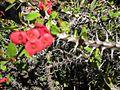 Gardenology.org-IMG 2681 hunt0903.jpg