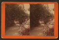 Gardens at Magnolia-on-the-Ashley, Charleston, by J. A. Palmer.png