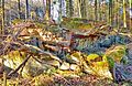 Gesprengter Bunker im Beckinger Wald 15.jpg