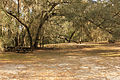 Gfp-florida-big-shaols-state-park-picnic-area.jpg