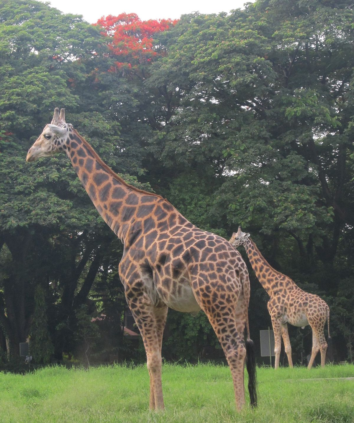 Mysore Zoo - Wikipedia