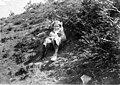 Girl sitting on hillside, 1900-1910 (WASTATE 3116).jpeg