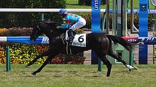 Glory Vase Japanese-bred Thoroughbred racehorse