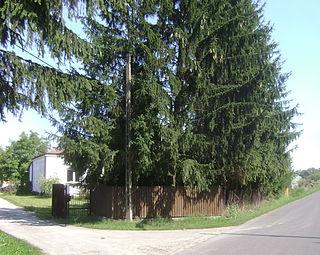 Borki, Piaseczno County Village in Masovian, Poland