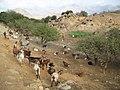 Goat enclosure between Drosopigi and Vachos - panoramio - macrolepis (1).jpg
