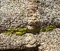 Granite with Quartz intrusionand Lichen - Flickr - brewbooks.jpg
