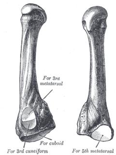 Fourth metatarsal bone