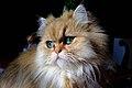 Green Eyes - Flickr - Franco Vannini.jpg