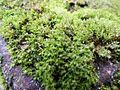 Green Moss.jpg