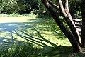Green lake - panoramio.jpg
