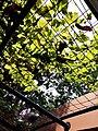 Green leaves hearted.jpg