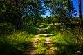 Green path, Fjärdlång, Stockholm (Sweden) - panoramio.jpg