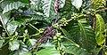 Greeness Coffee Beans 01.jpg