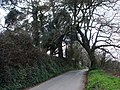 Greenway Road, Hook Bottom - geograph.org.uk - 368955.jpg