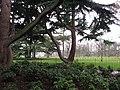Greenwich Park - geograph.org.uk - 2244348.jpg