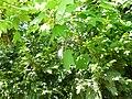 Greenwood forest farming 02.JPG