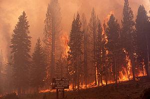 300px-Ground_fire_at_Grant_Village_2.jpg