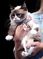 Grumpy Cat (14534417224) (cropped).jpg