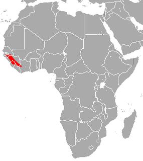 Guinean horseshoe bat Species of bat