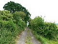 Gypsy Lane, near Draycot Foliat - geograph.org.uk - 859455.jpg