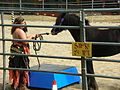 Gypsy Vanner horse at Norcal Ren Faire 2010-09-19 3.JPG