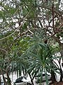 HK 半山區 Mid-levels 般咸道 Bonham Road green trees February 2020 SS2 06.jpg