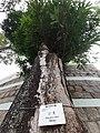 HK SPK 新蒲崗 San Po Kong 彩虹道 Choi Hung Road 遊樂場 Playground near 雙喜街 Sheung Hei Street December 2020 SS2 07.jpg