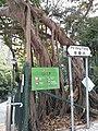 HK SW 上環 Sheung Wan 普義街 Po Yee Street near 磅巷 Pound Lane 普慶坊 Po Hing Fong near 卜公花園 Blake Garden February 2020 SS2 04.jpg