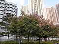HK TKO 將軍澳 Tseung Kwan O 唐明街公園 Tong Ming Street Park November 2019 SS2 27.jpg