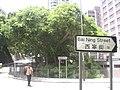 HK Victoria Road Sai Ning Street 18 Tree.JPG