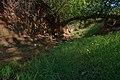 Habitat area near spring on Walking M Ranch in Baylor County near Seymour, Texas. (25117392125).jpg