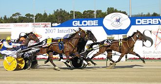 Harness racing in Adelaide Harness Racing (Pacers).jpg