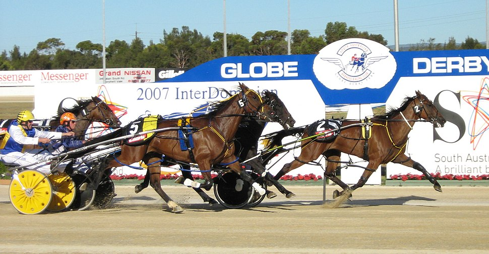 Harness Racing (Pacers)